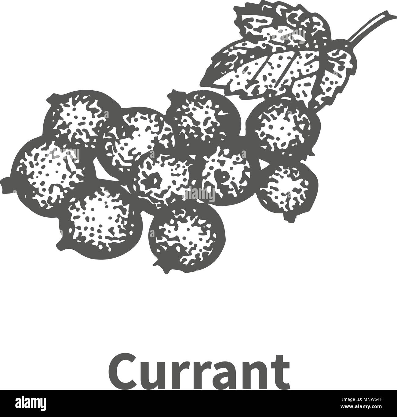 Vector illustration hand-drawn currant - Stock Image