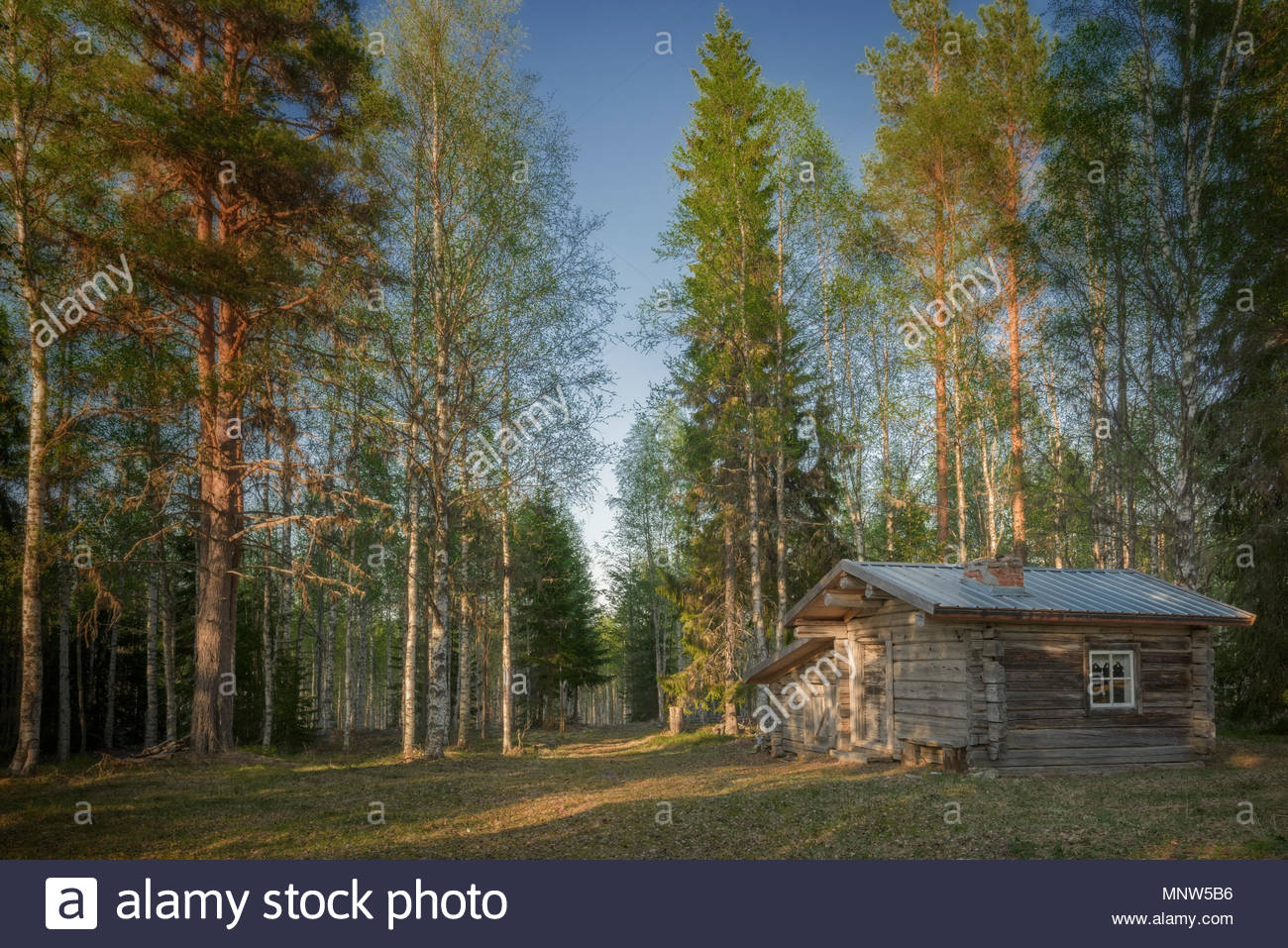 Log Cabin in an swedish forest - Stock Image