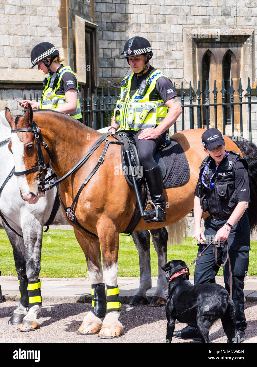 Police Horse riders and Dog Handler, Outside Windsor Castle, The Long Walk, Windsor, Berkshire, England, UK, GB. - Stock Image