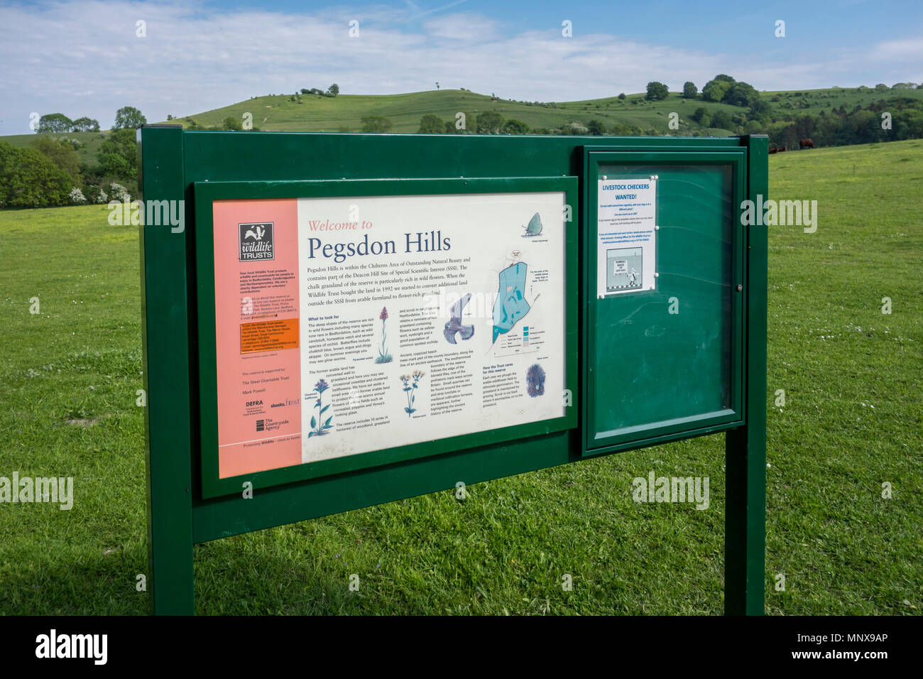 Pegsdon Hills and Hoo Bit, nature reserve in Pegsdon, Bedfordshire in the Chilterns Area of Outstanding Natural Beauty - Stock Image