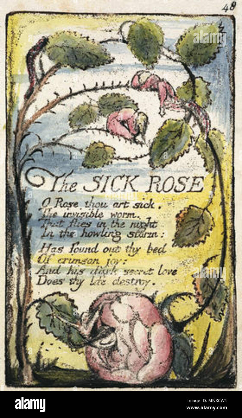 the fly poem william blake