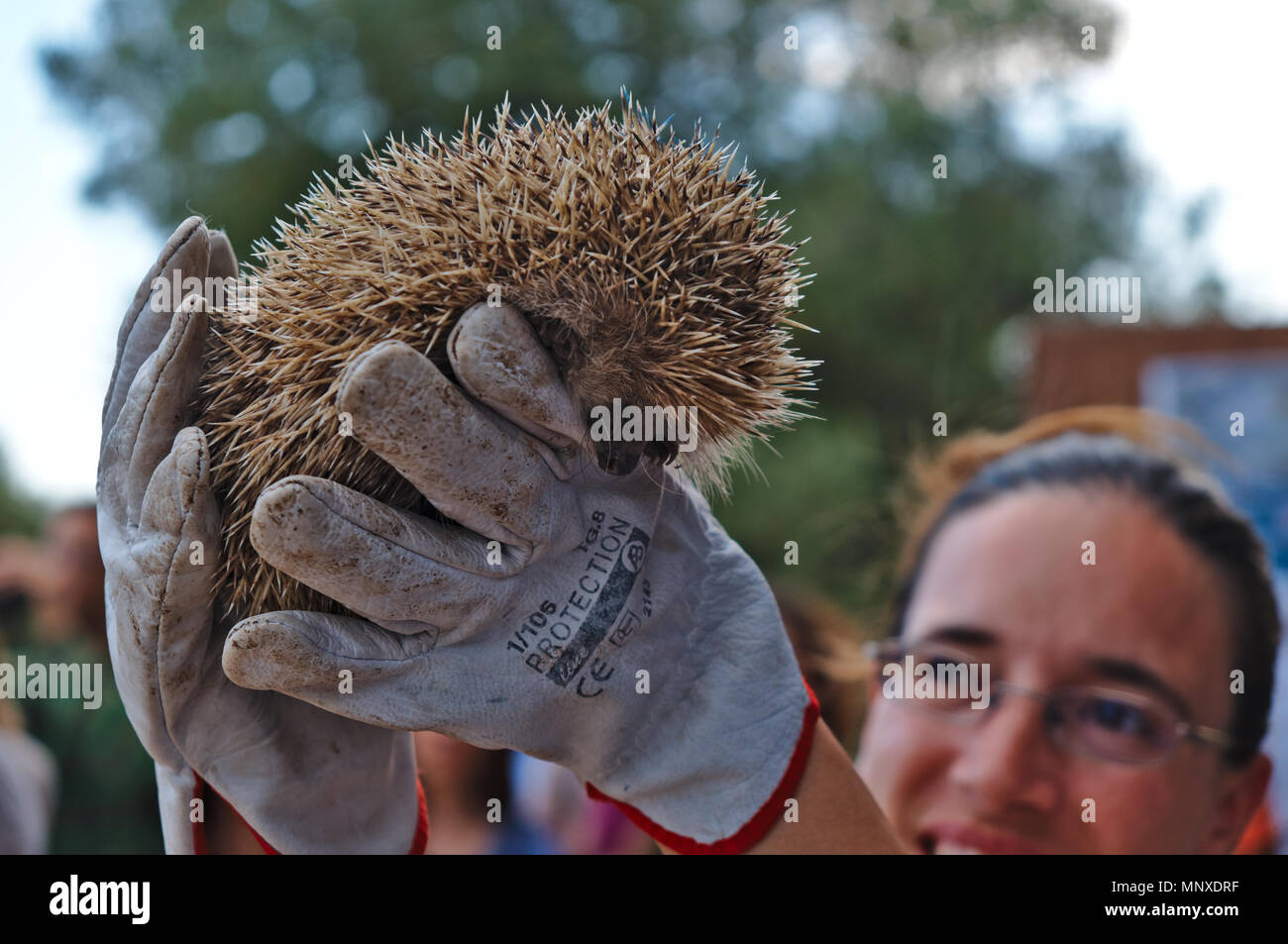 Hedgehogs released by RIAS in Ria Formosa Natural Park. Algarve, Portugal - Stock Image