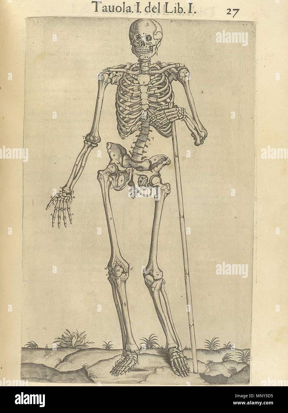 Anatomía Del Cuerpo Humano Stock Photos & Anatomía Del Cuerpo Humano ...