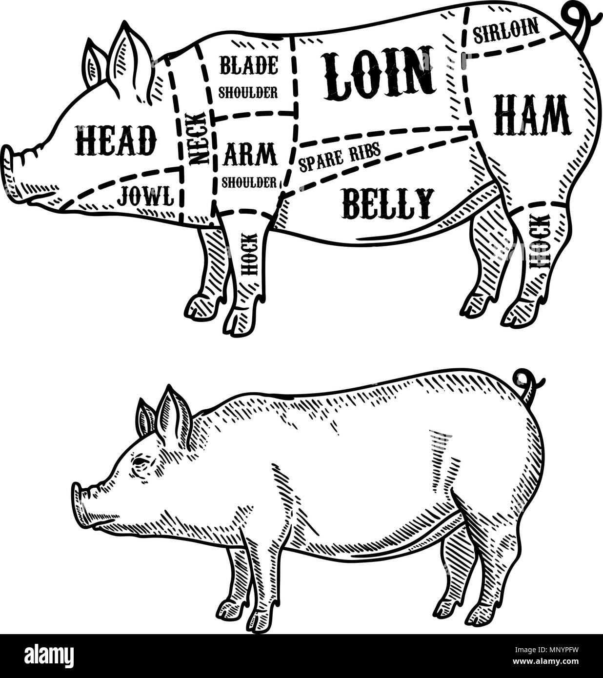 pig butcher diagram. Pork cuts. Design element for poster, card ...