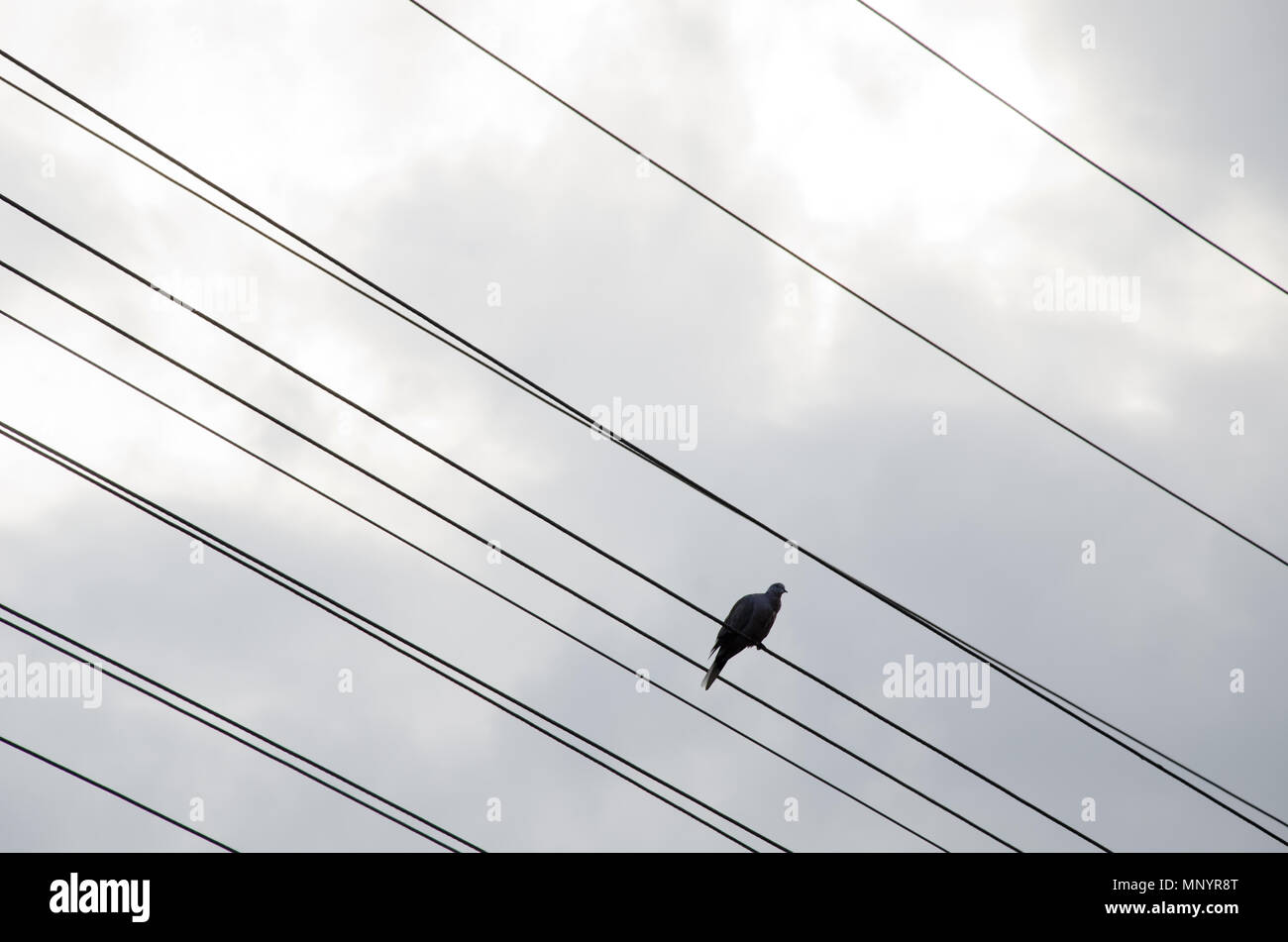 one single bird on wire and cloudy sky as background Stock Photo ...