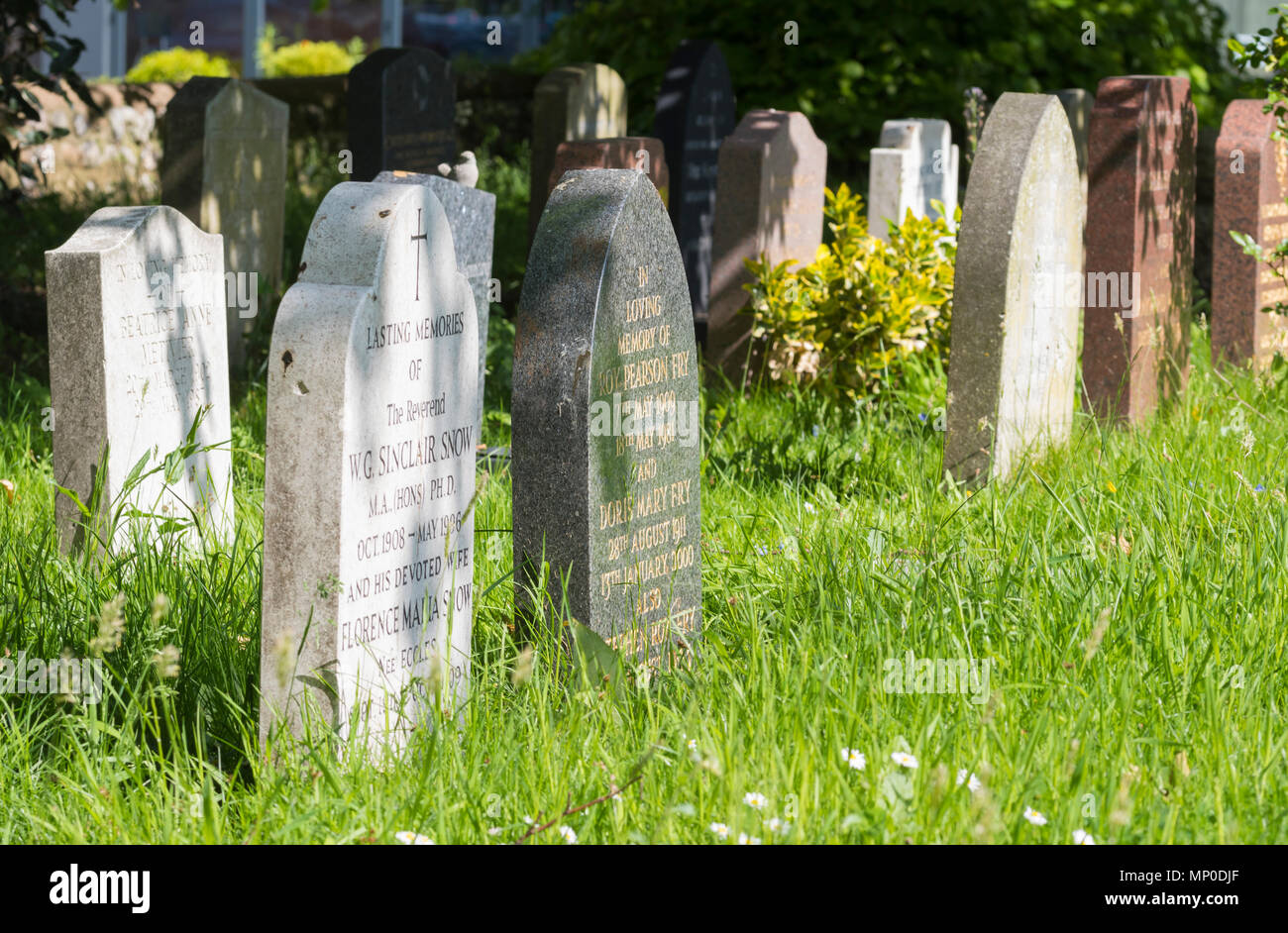 Gravestones in a small cemetery with long grass growing in Spring in the UK. - Stock Image