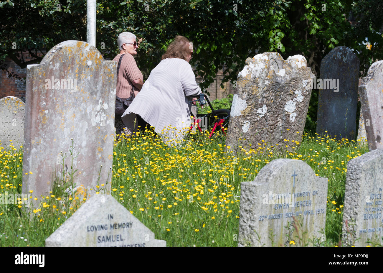 People walking through a graveyard with Buttercups growing amongst the old gravestones, in the UK. - Stock Image