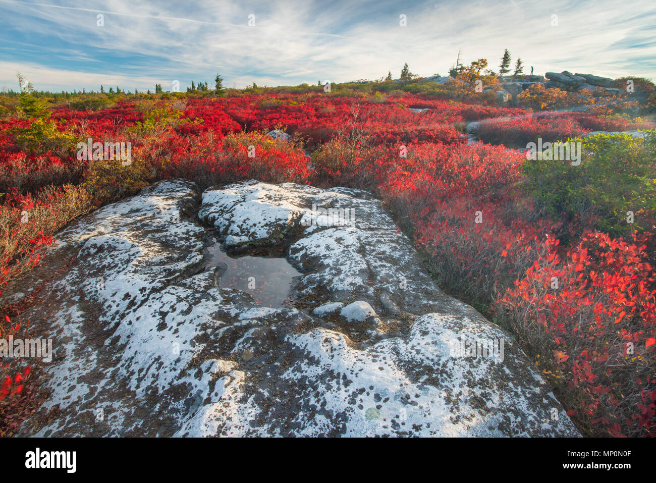 Autumn morning on Dolly Sods West Virginia - Stock Image
