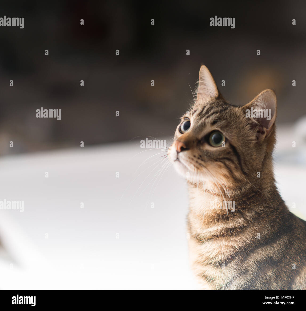 Beautiful relaxed domestic cat at home Stock Photo