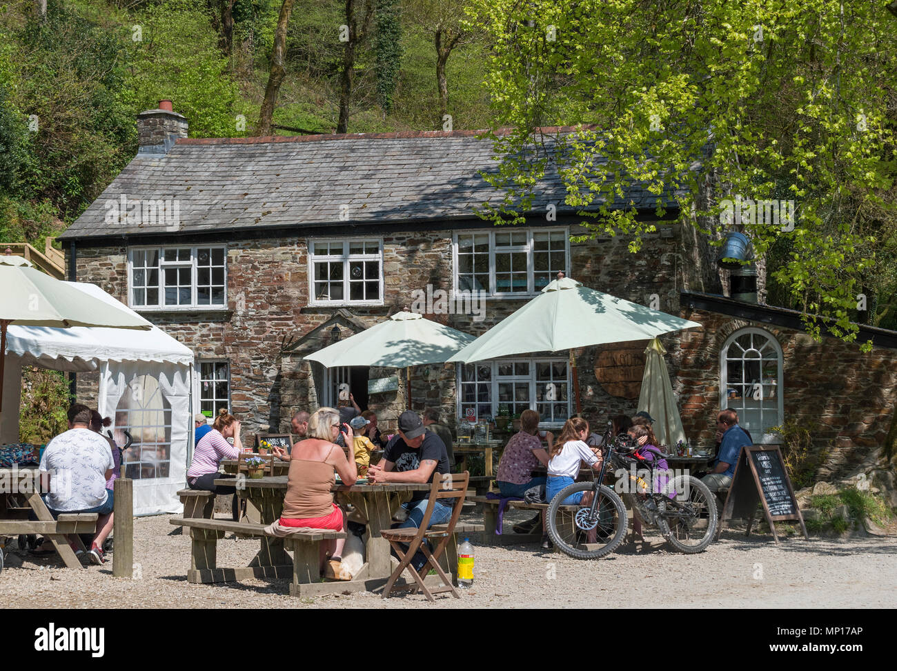 visitors, people, tourists at the cafe in cardinham woods, cornwall, england, britainb, uk, - Stock Image