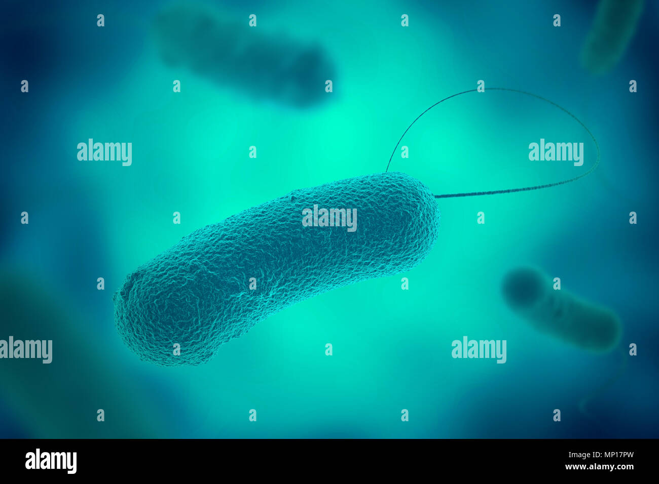 Blue legionella bacterium with flagella microscopic view in fluid 3D illustration - Stock Image