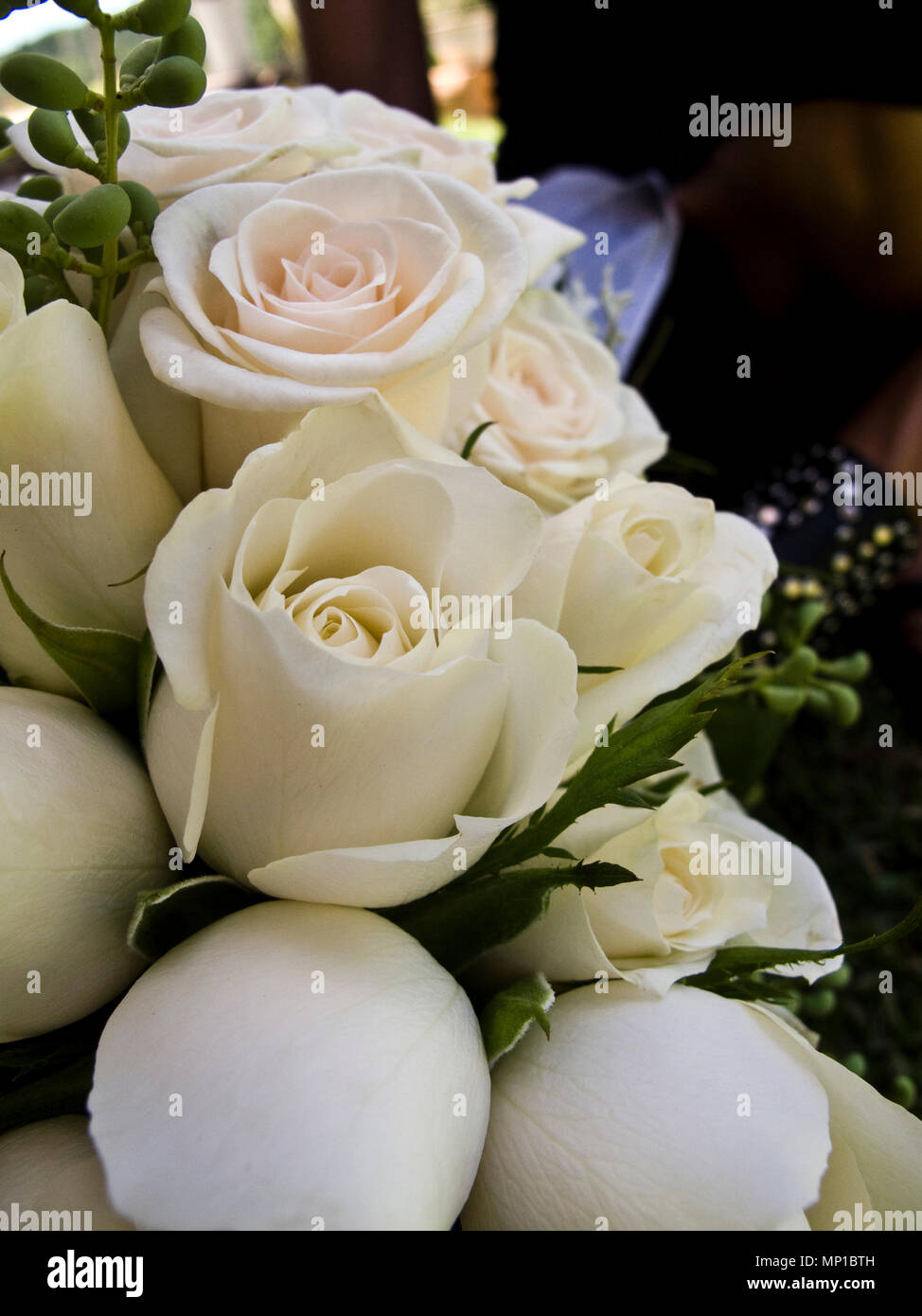Stylish And Delicate Roses White Cream Pink Rose Petals Fresh Bouquet Arrangement For Wedding Stock Photo Alamy