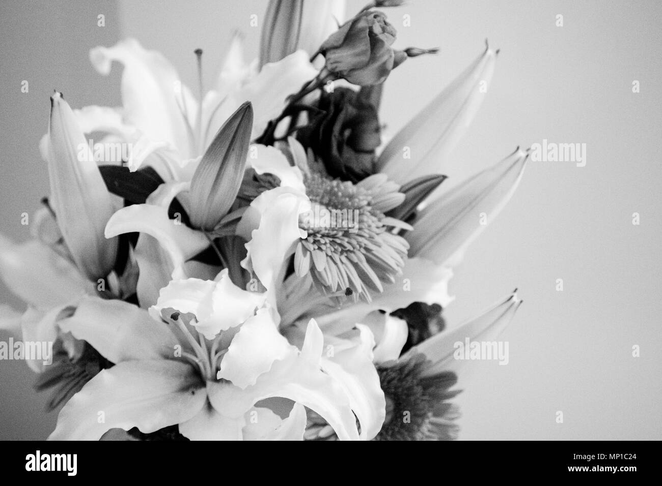Lily Gerbera Black And White Flower Arrangement Bw Photos Of Flowers