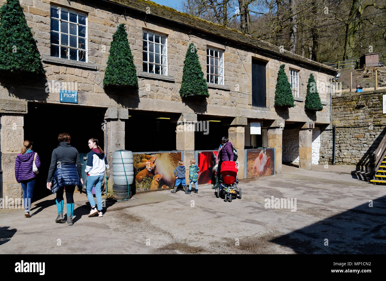 People going in to see the pigs in the Farmyard at Chatsworth House, Bakewell, Derbyshire - Stock Image