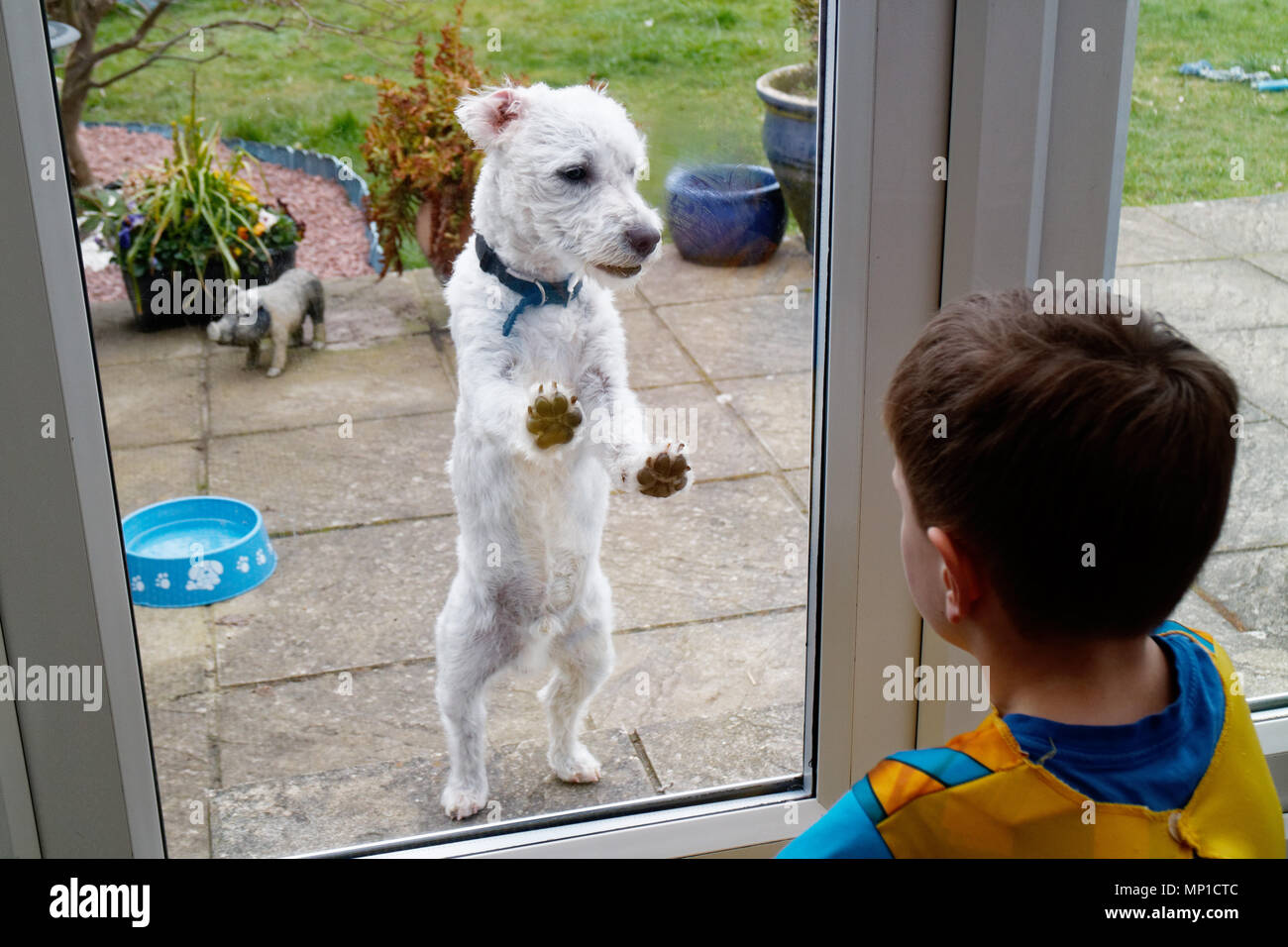 A small dog and a little boy (5 yr old) looking at each other through a glass patio door - Stock Image
