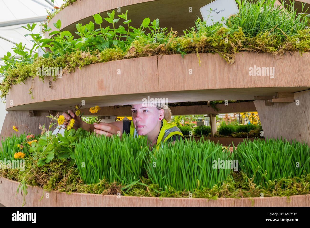 London, UK  20th May 2018  A communal planter, part of The
