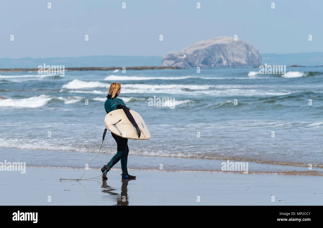 Female surfer carries  surfboards to sea at Belhaven Beach, Bass Rock in distance, East Lothian, Scotland, United Kingdom - Stock Image