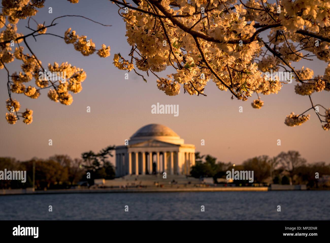 Washington, DC Cherry Blossom Festival - Stock Image