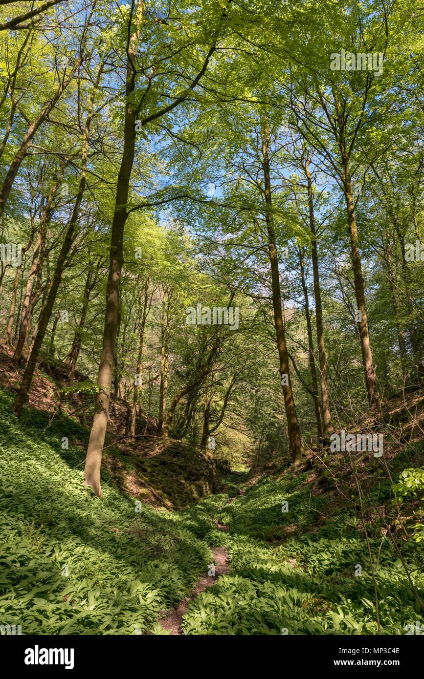 Public footpath near Ashford-in-the-Water, Peak District, Derbyshire, England, UK - Stock Image