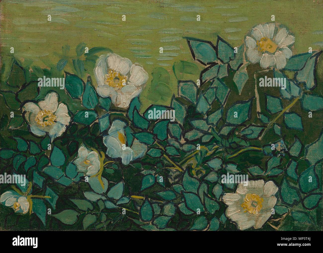 Vincent van gogh roses van gogh museum stock photos & vincent van