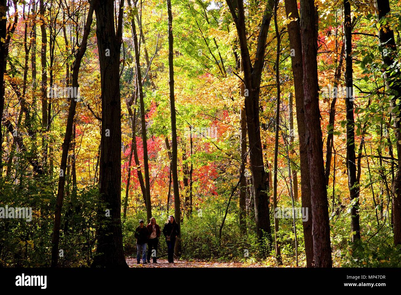 Hickers enjoying a full spectrum of fall colors. - Stock Image