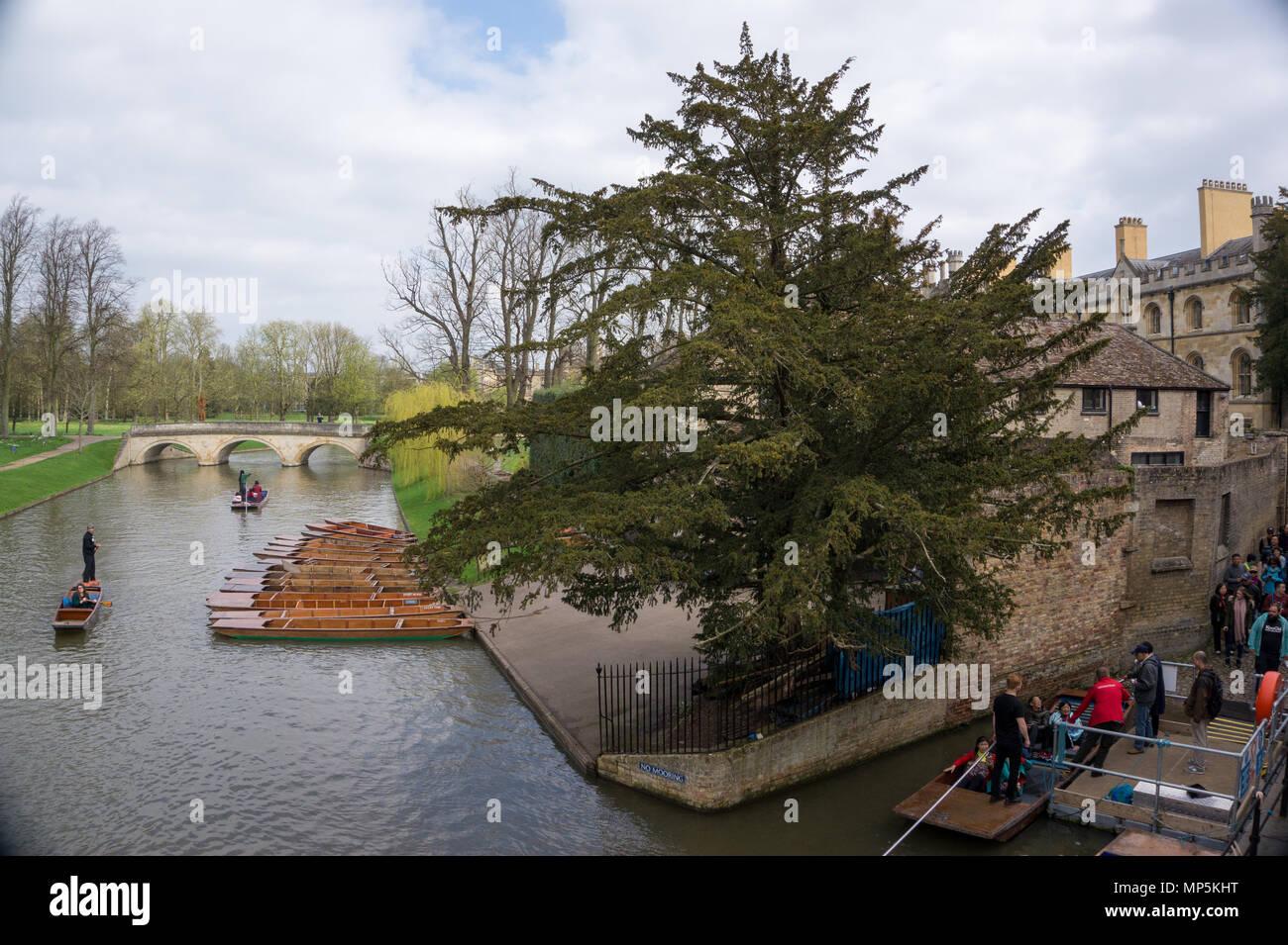 Punting tour in Cam River, Cambridge United Kingdom - Stock Image