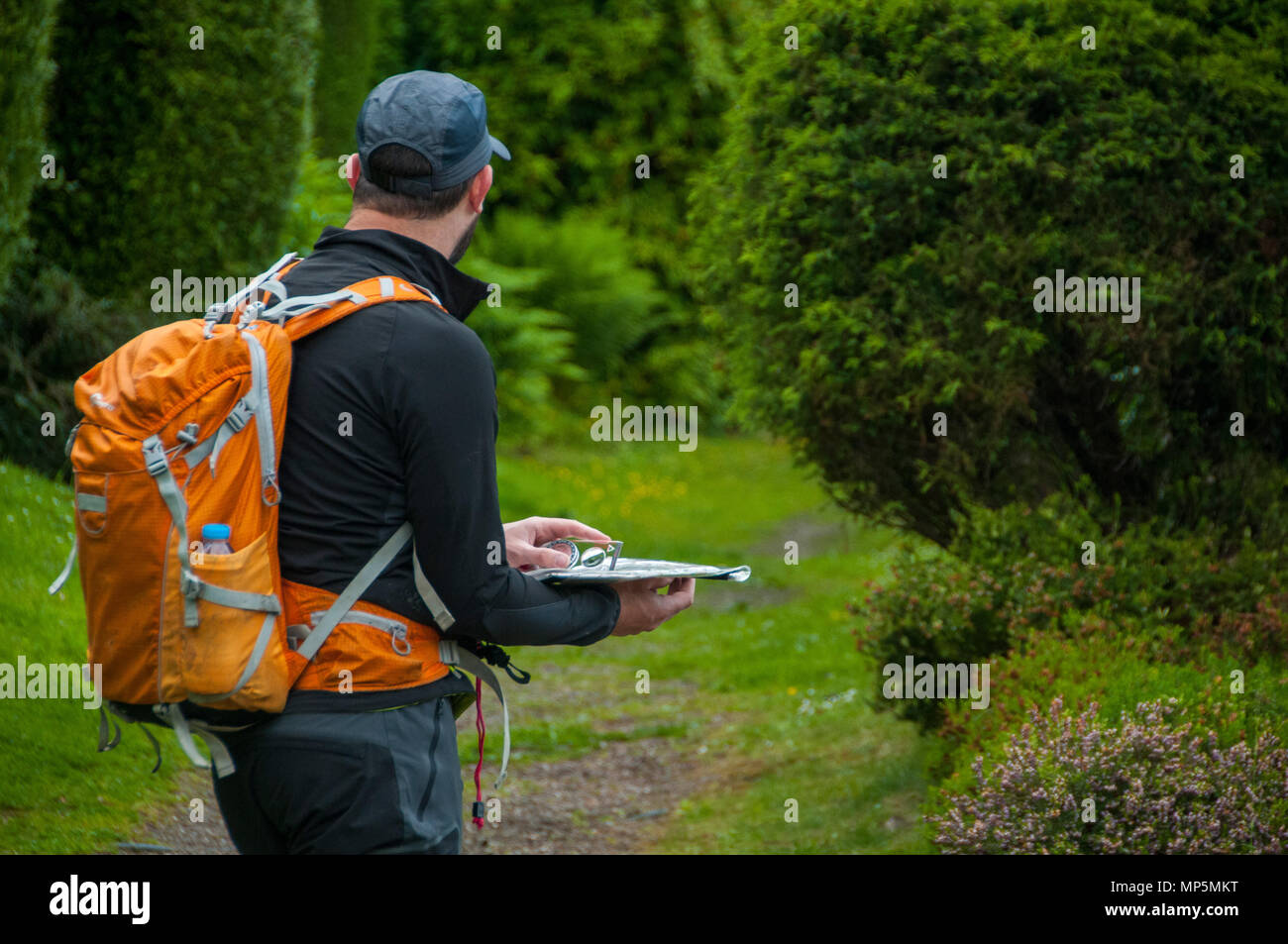 Hiker using map and compass for navigation - Stock Image