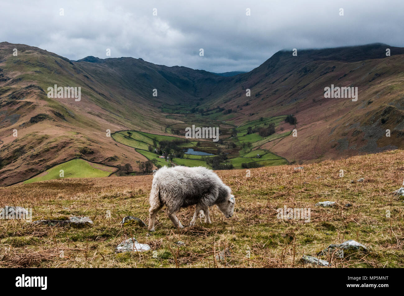 View towards Martindale from Hallin Fell, Cumbria, UK. - Stock Image