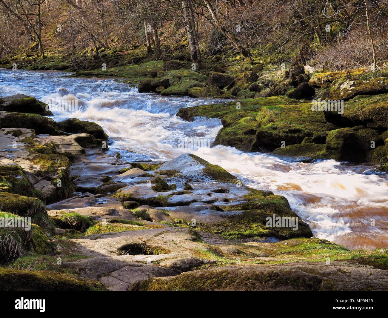On the banks of The Strid, near Bolton Abbey, Yorkshire Dales - Stock Image