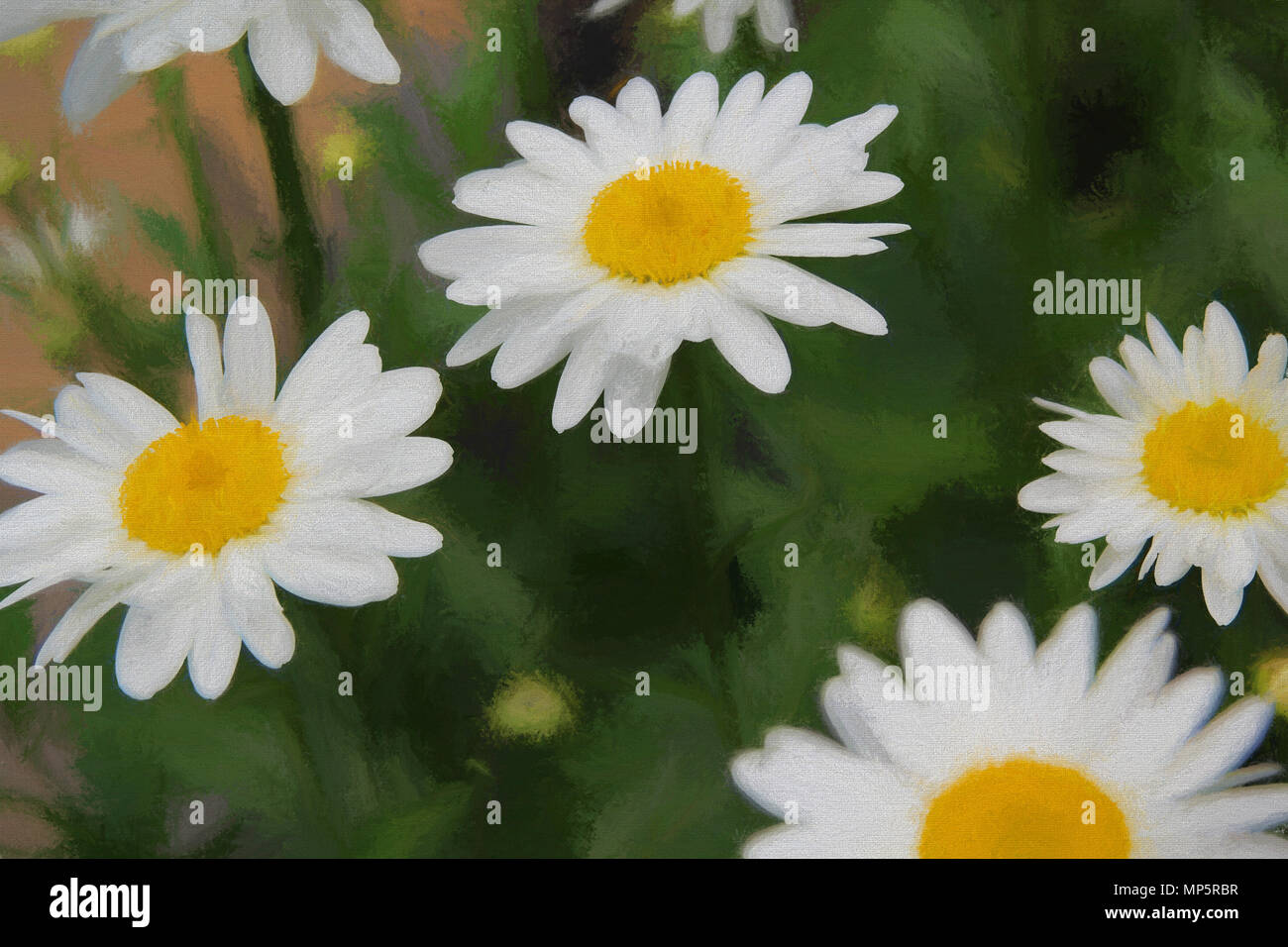 Atrsy Soft Daisies on green background - Stock Image