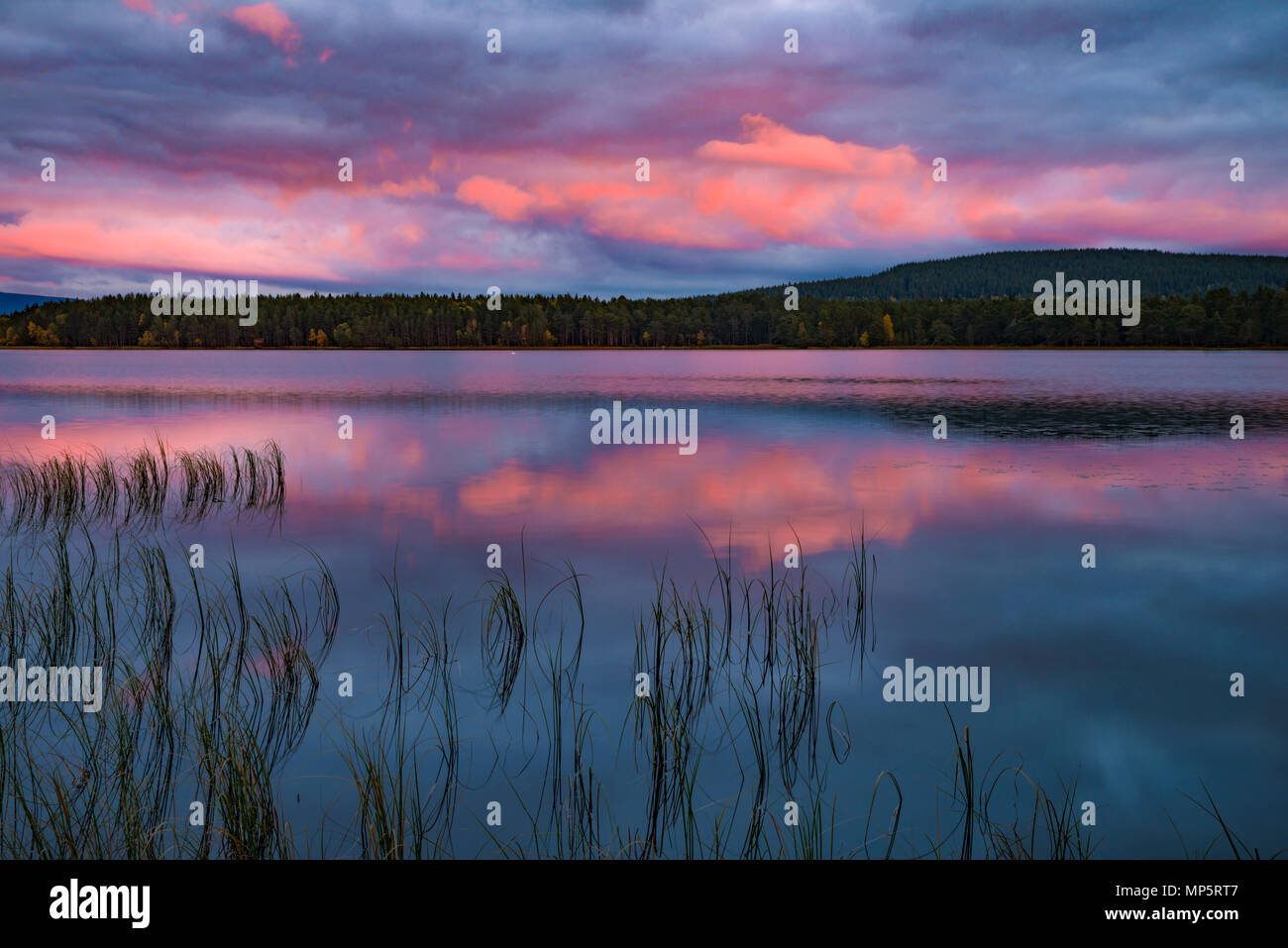 Loch Garten sunset, Cairngorms National Park, Scotland, UK - Stock Image