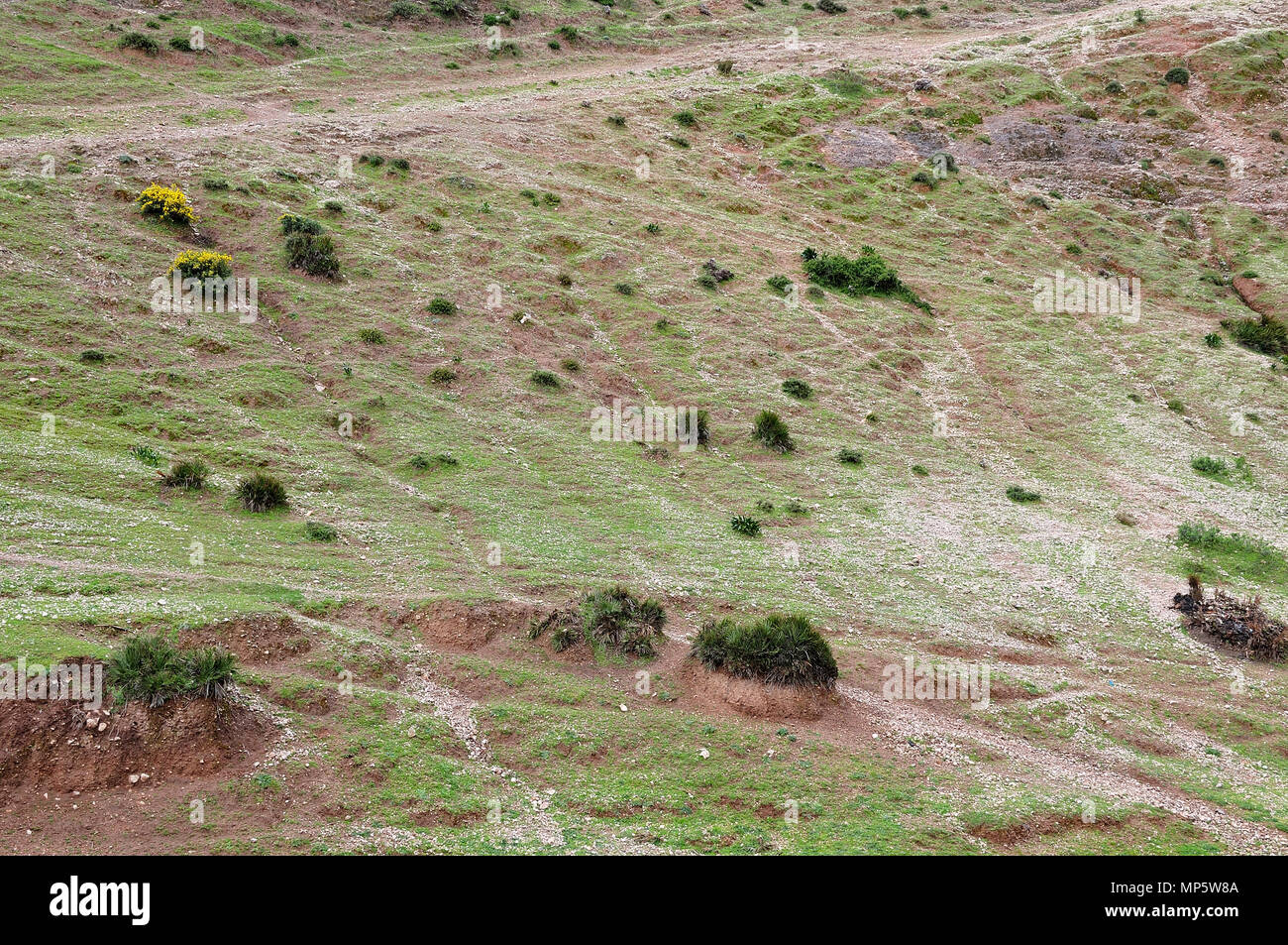 mountain side in atlas mountains; Morocco; with sparse vegetation and rock detritus - Stock Image