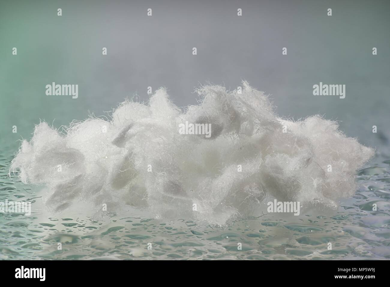Cellulose fibers - Stock Image