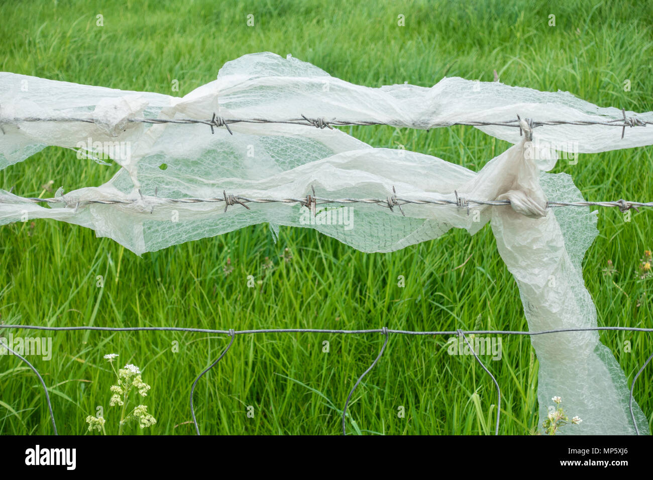 Plastic packaging (bubble wrap) on barbed wire fence. England. UK Stock Photo