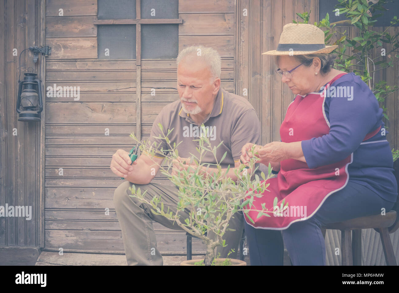 elderly senior couple in countryside like home farm work together, with plants cutting and repair them. family concept of life forever together with l - Stock Image