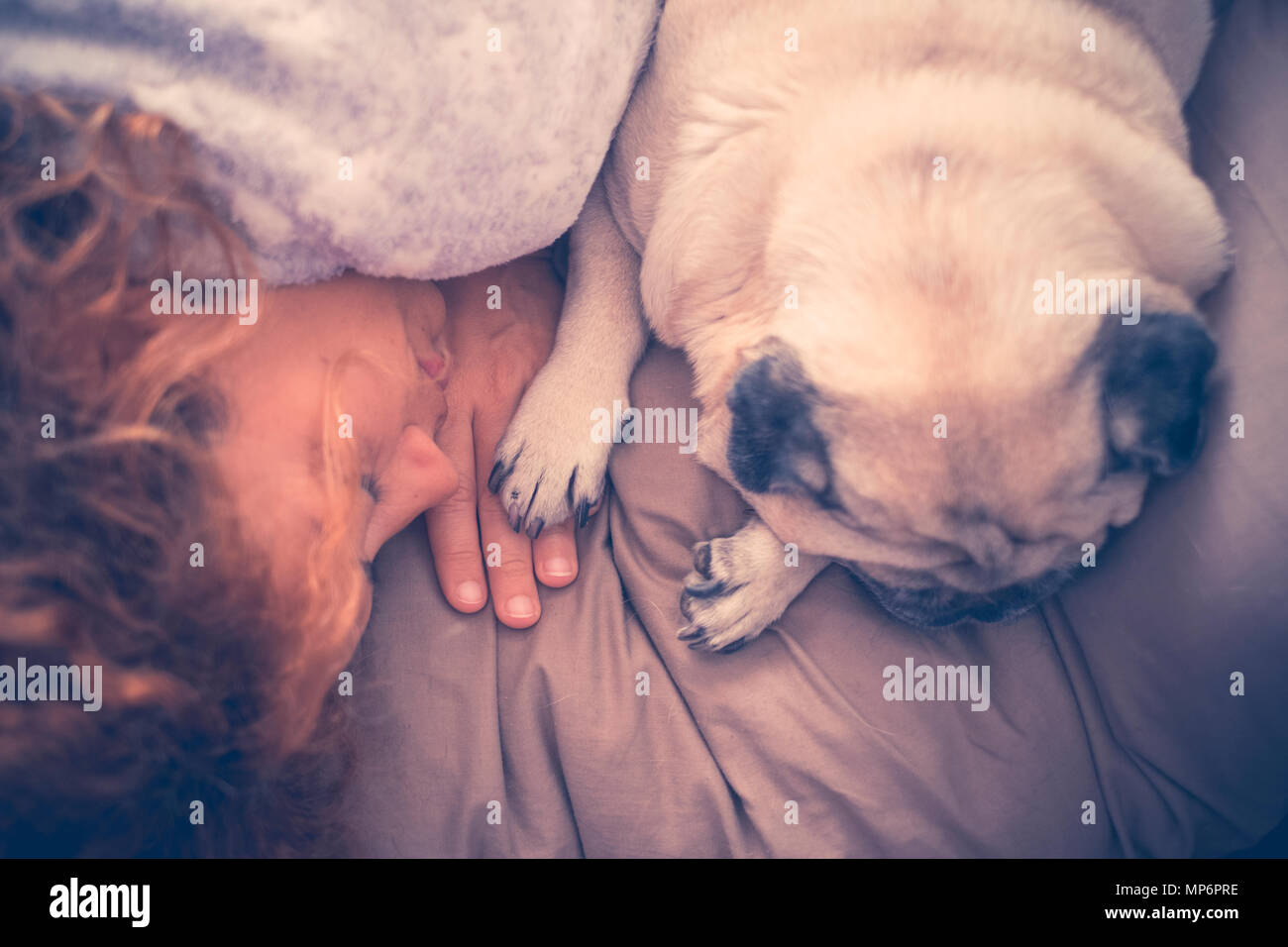 true and great love concept scene between nice beautiful woman and cute puppy dog pug sleeping together with protection and touch hand with paw. conta - Stock Image