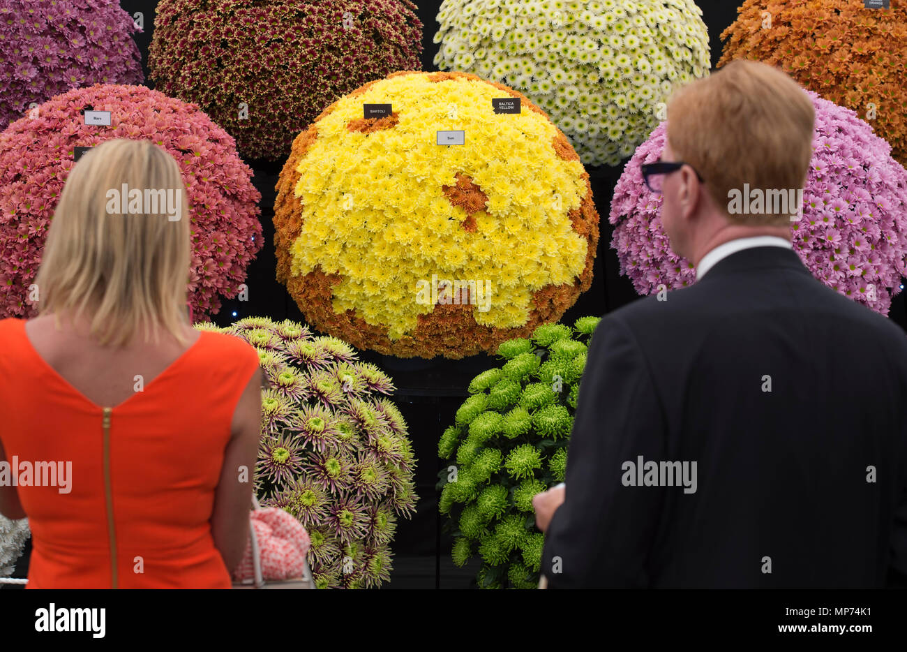 Royal Hospital Chelsea, London, UK. 21 May, 2018. Press day for the RHS Chelsea Flower Show 2018. Photo: Vibrant colours in The Great Pavilion. Credit: Malcolm Park/Alamy Live News. - Stock Image