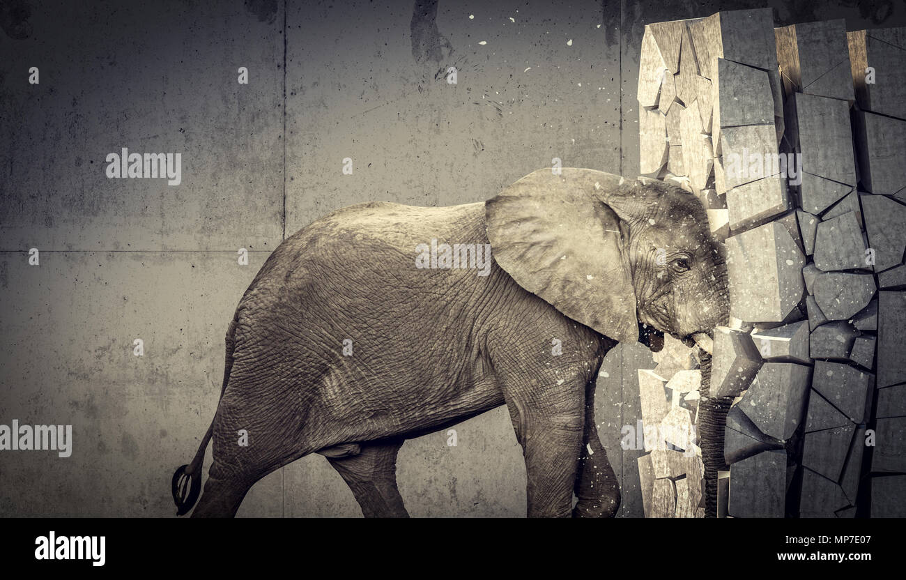 african elephant destroy concrete wall - Stock Image
