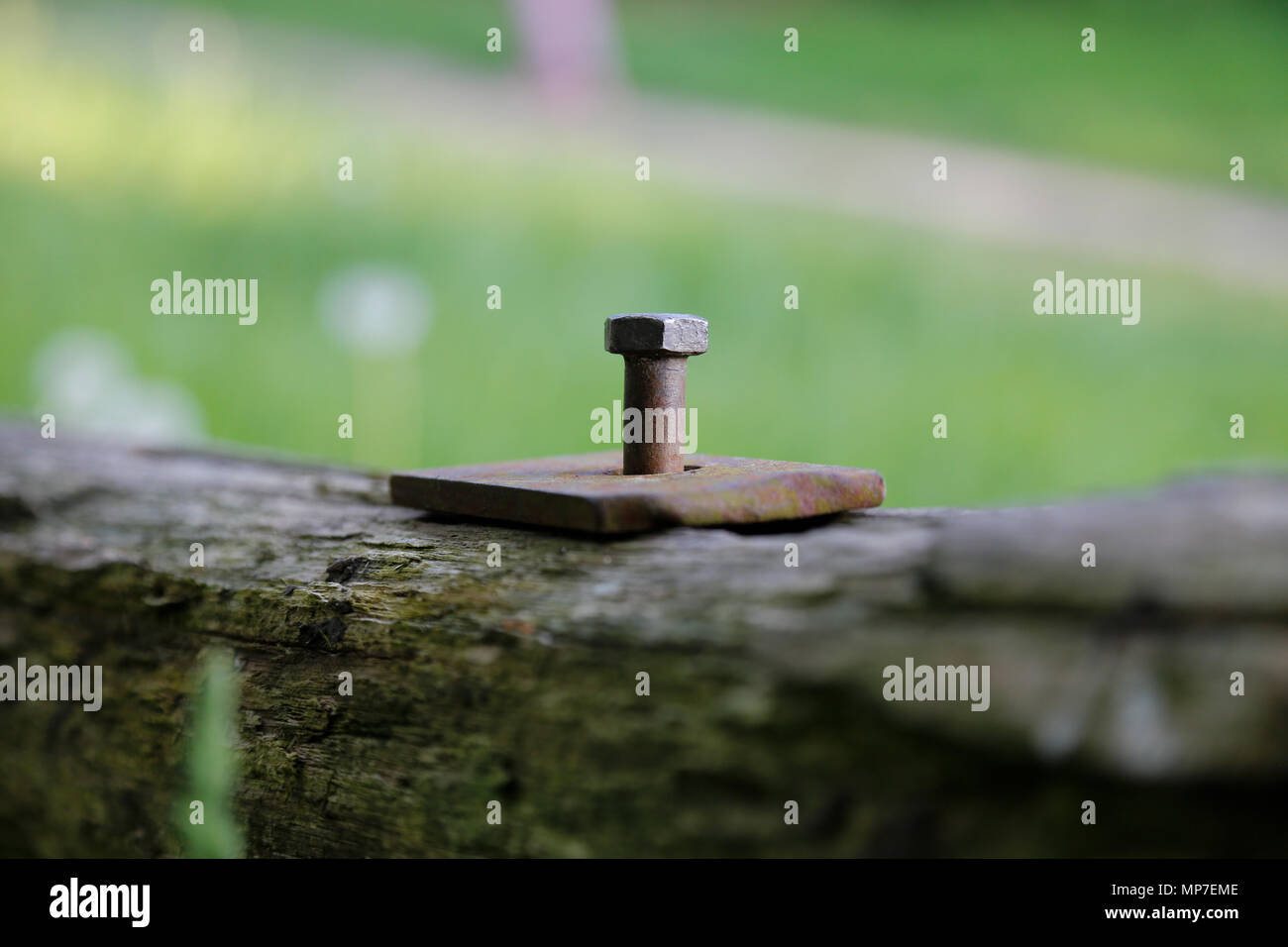 Rusty metal bolt in wooden post - Stock Image