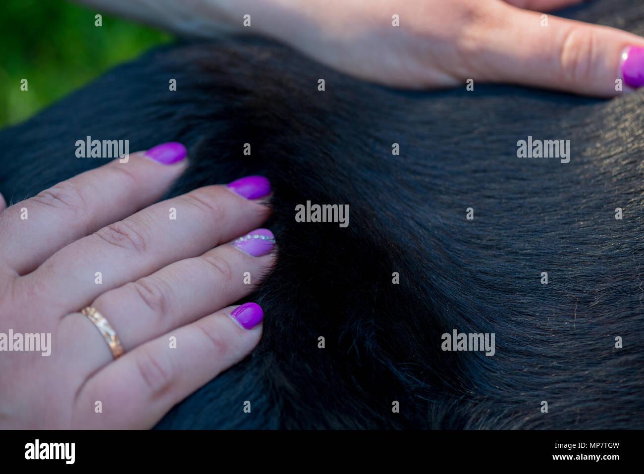 Human hands doing dog massage - Stock Image