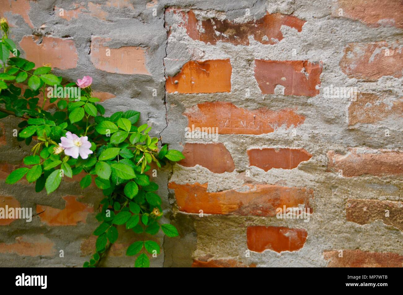 Flower power of resilience - Stock Image