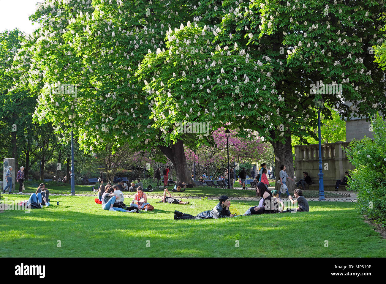 Young people relaxing on the lawn by a flowering horse chestnut tree in spring in a park in sunshine in Paris France   KATHY DEWITT - Stock Image