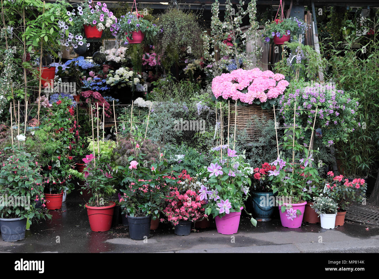 Île de la Cité Flower Market group of plant pots in a Left Bank garden at Left Bank gardening shop, Place Lepine Paris France Europe EU  KATHY DEWITT - Stock Image