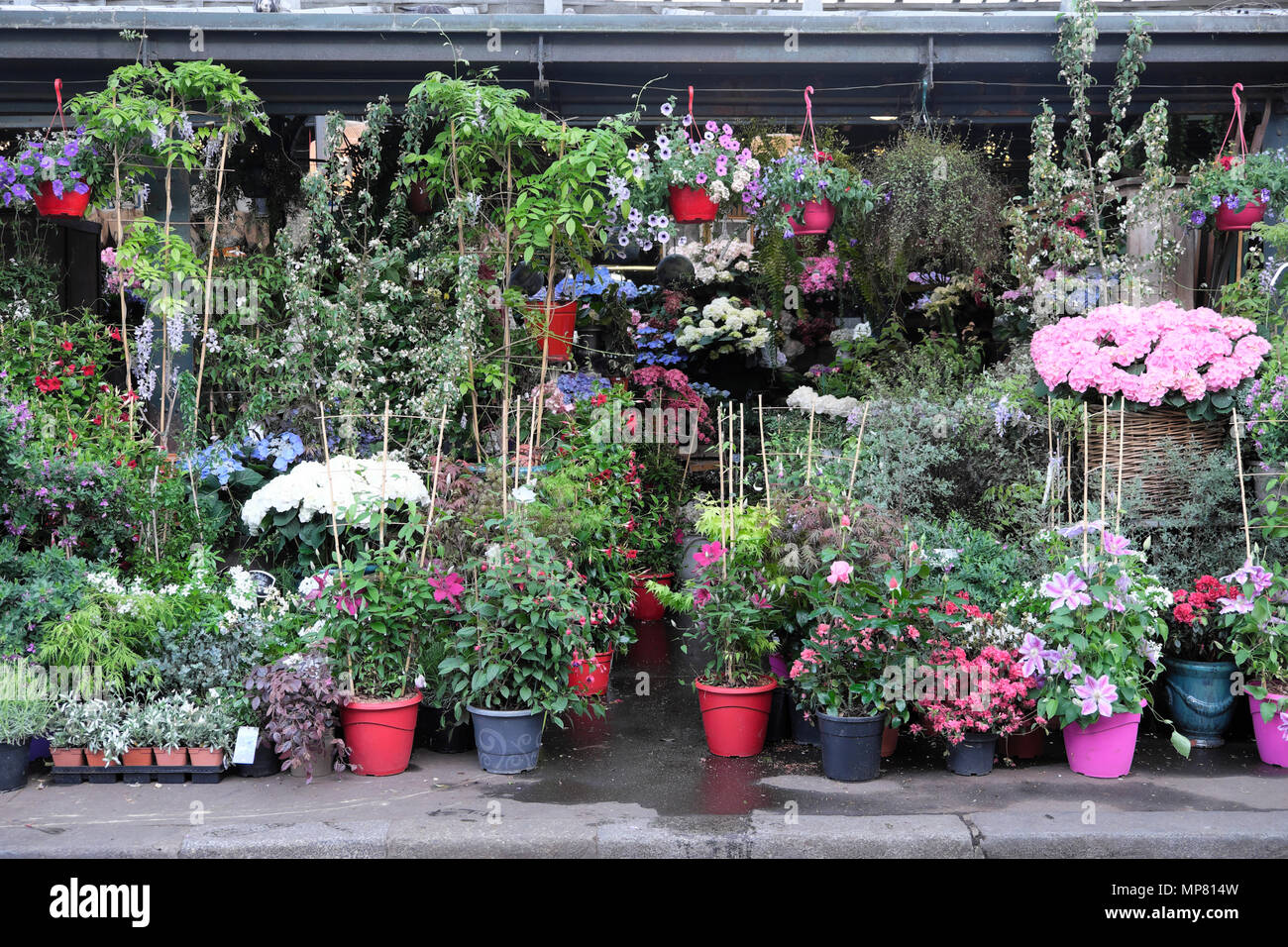 Paris Flower Market flowers in a group of garden plant pots grouped at Place Lepine in Île de la Cité Paris, France Europe EU  KATHY DEWITT - Stock Image