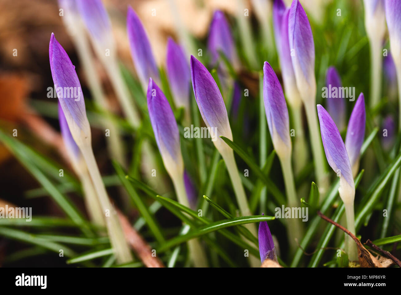Purple Flowers Against A Green Grass In The Gardenfresh Stock Photo