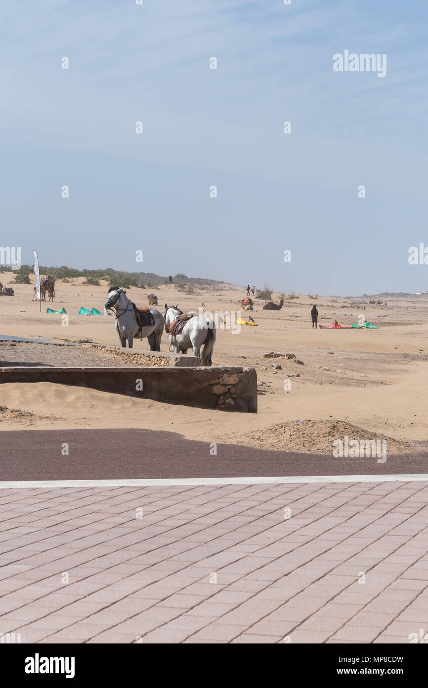 Horses moored at the beach - Stock Image