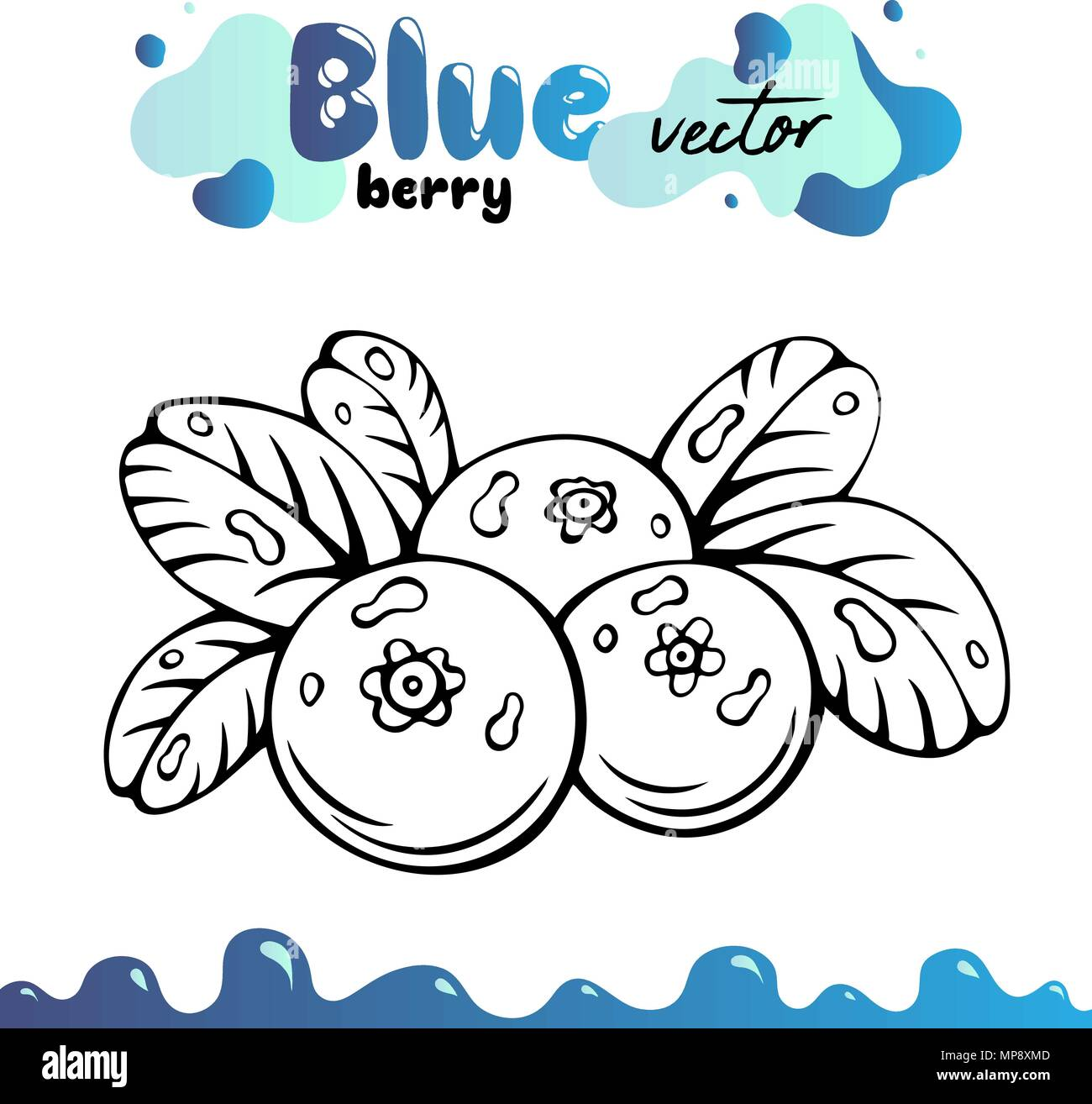 Blueberry vector illustration, berries images. Isolated blueberry vector illustration for menu, package design. Sketch blueberry berries images. Isolated blueberry vector illustration, berries images - Stock Vector