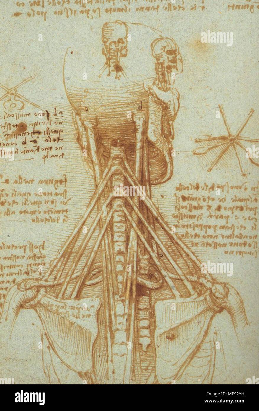 Anatomy Of The Neck Circa 1515 Leonardo Da Vinci 14521519