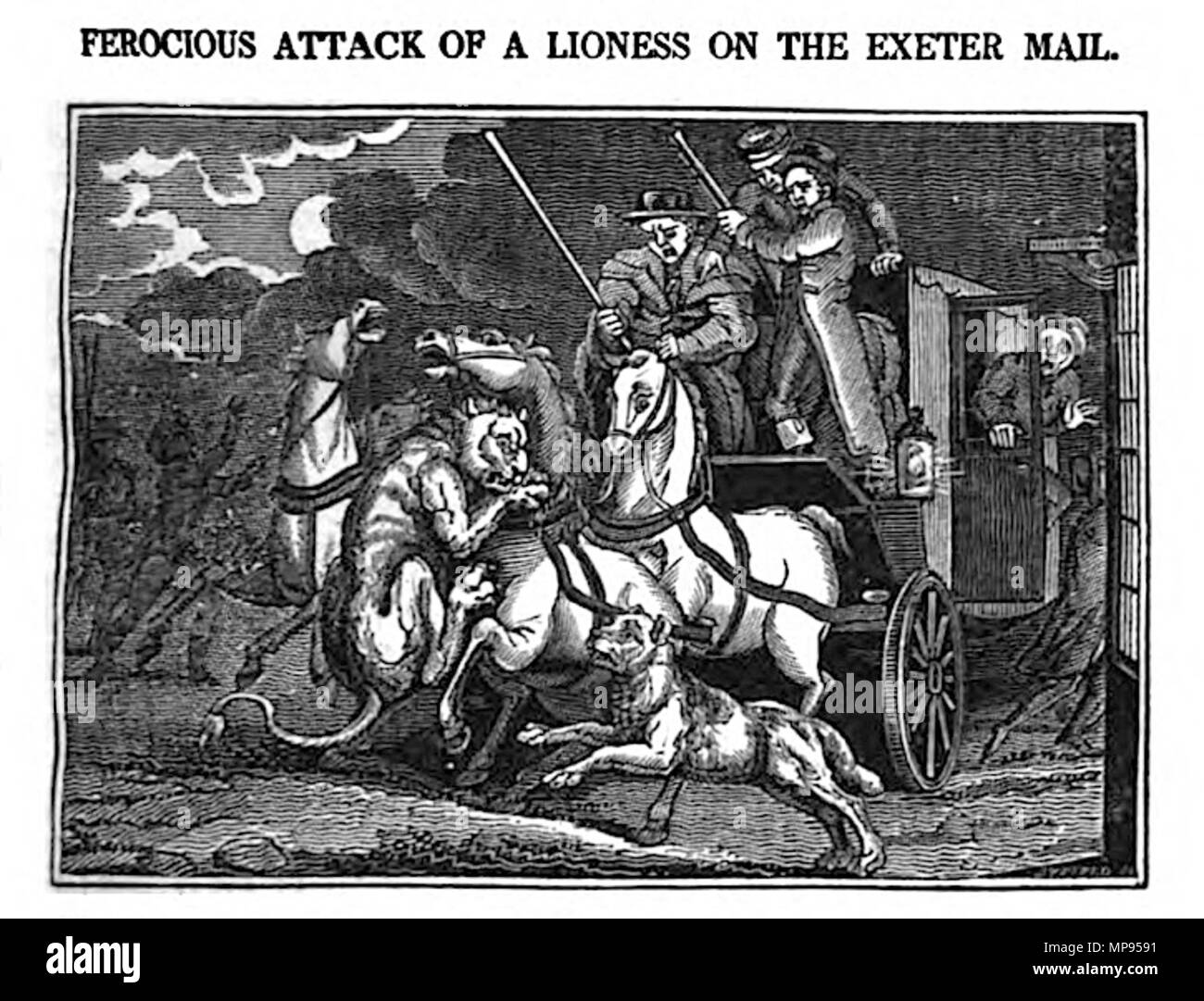 . English: Ferocious attack of a lioness on the Exeter Mail [The lion attack occurred on the night of October 20, 1816, as the mail coach - nicknamed Quicksilver due to its speed - travelled from Exeter to the capital.] . 1825. John Byfield 812 Lion attacking the Exeter mail coach in 1816 - Stock Image