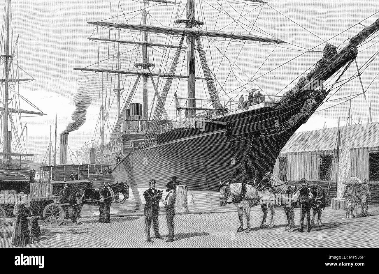 Engraving of wharfies loading frozen mutton at Queen's Wharf, Auckland circa 1880, New Zealand. From the Picturesque Atlas of Australasia Vol 3, 1886 - Stock Image